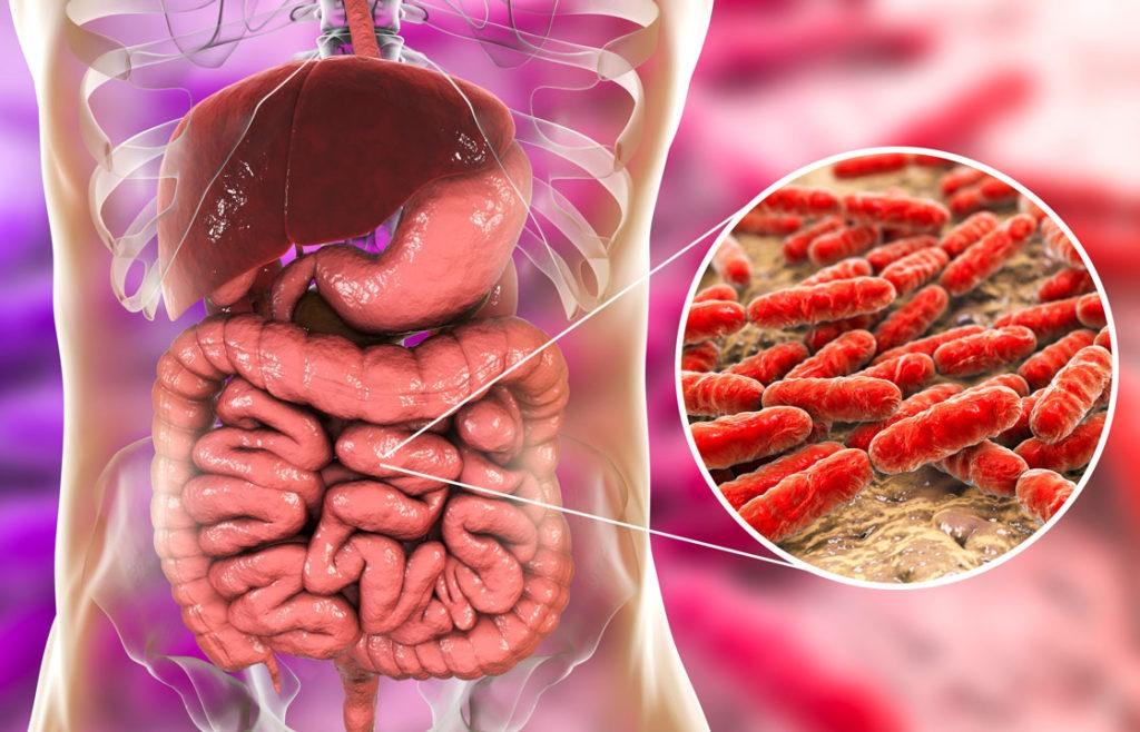 Das gastro-intestinale Mikrobiom beherbergt rund 100 Billionen Bakterien.