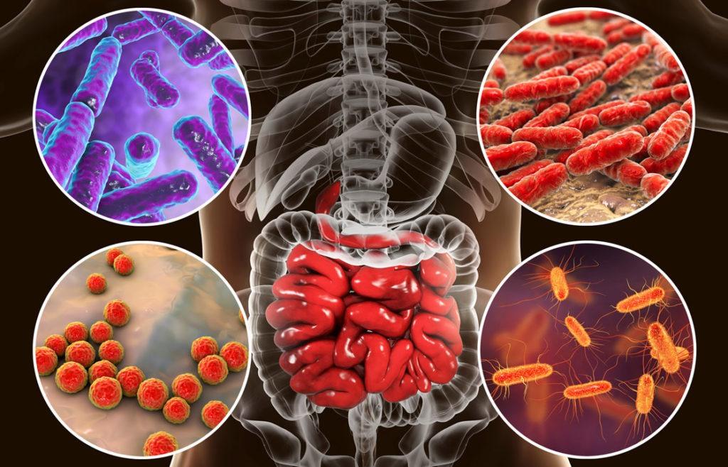 Die Zellen unserer Darmschleimhaut erneuern sich innerhalb von drei Tagen vollständig.
