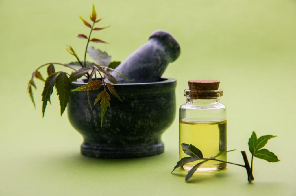 Blätter des Neem-Baumes haben eine antibakterielle und antivirale Wirkung - gut für die Psoriasis Ernährung