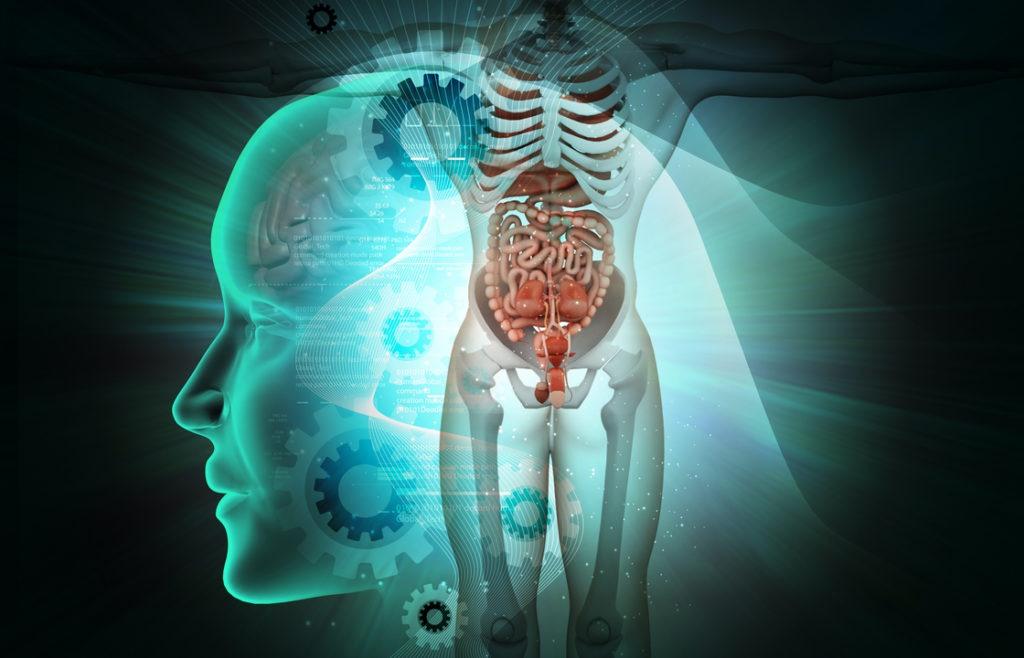 Migräne. Gehirn und Darm sind miteinander verbunden
