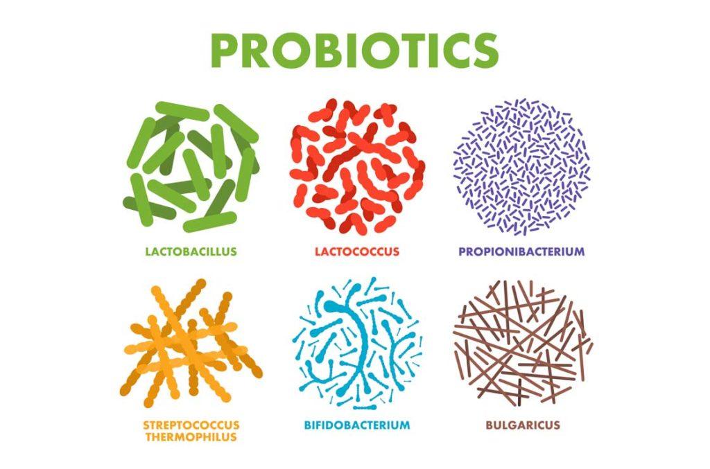 Kollagene Colitis nützliche Bakterien