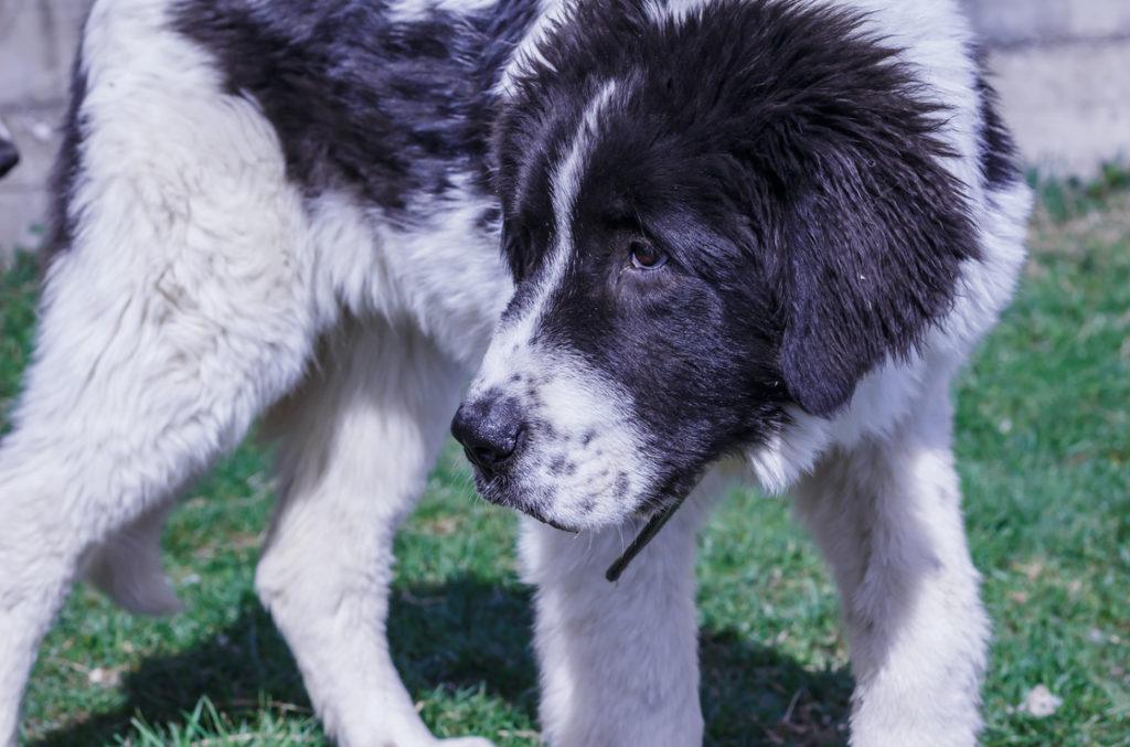 Auch Hunde haben Darmparasiten Symptome