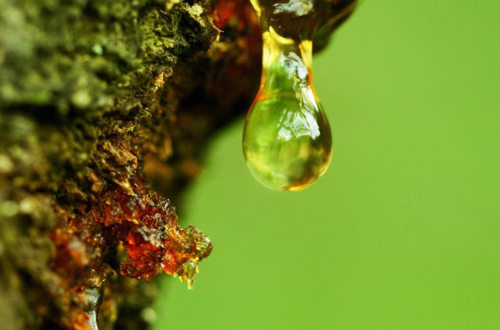 Boswellia ist eine Pflanzengattung in der Familie der Balsambaumgewächse - gut gegen Gicht
