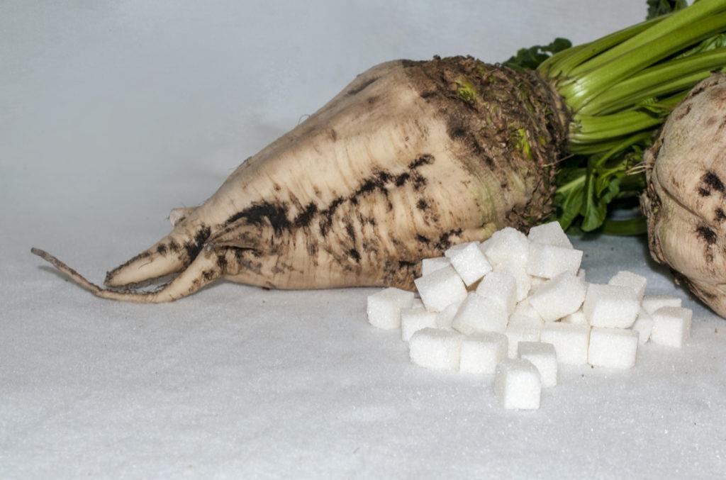 Zucker aus der Zuckerrübe