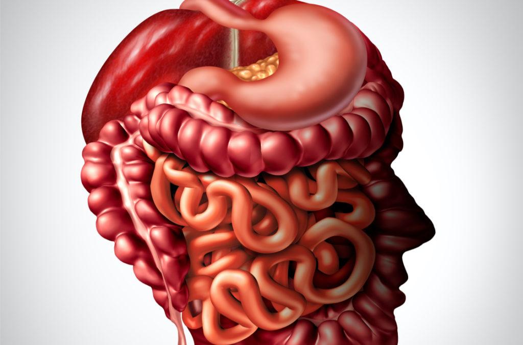 Das Darm-Hirn
